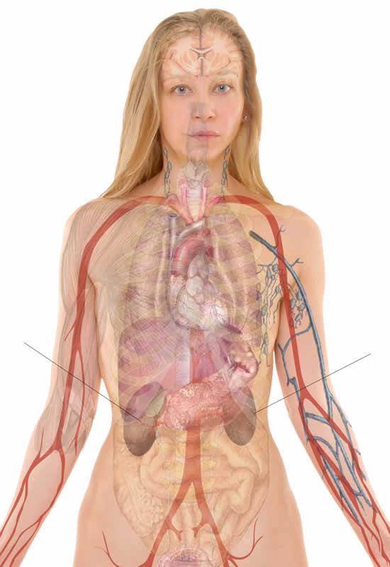 Lage der Nieren