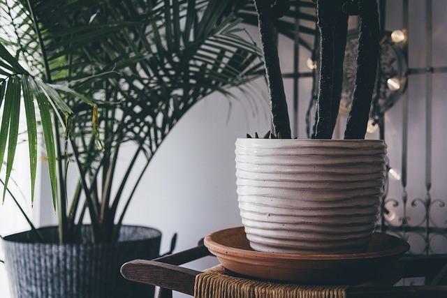Zimmerpflanzen helfen nicht gegen Pollen
