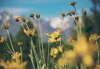 Pollenzeit