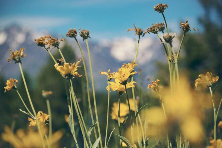 Allergien und Asthma: Arten, Behandlung, Kliniken